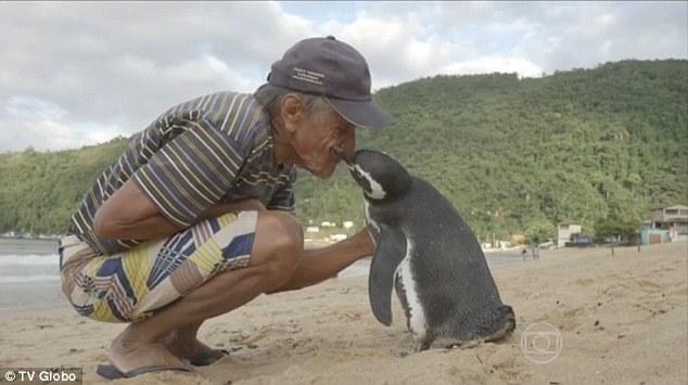 Kisah Nyata Hubungan Manusia dengan Penguin yang Mengharukan